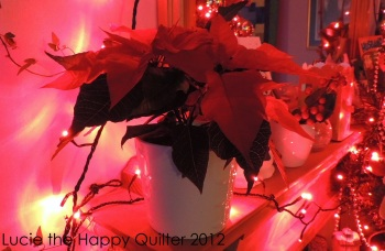 Poinsettia Plant Day 5