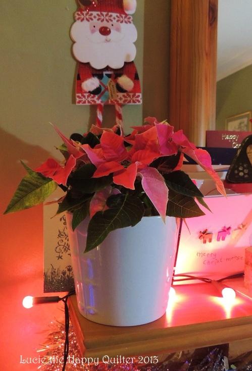 Poinsettia still going strong