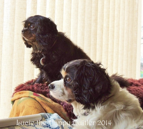 Maisie and Tippy waiting for hubby