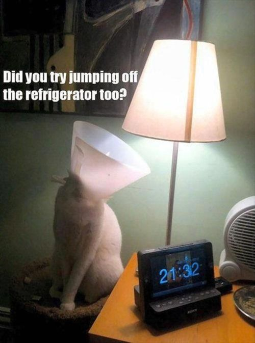 Cat talking to lamp