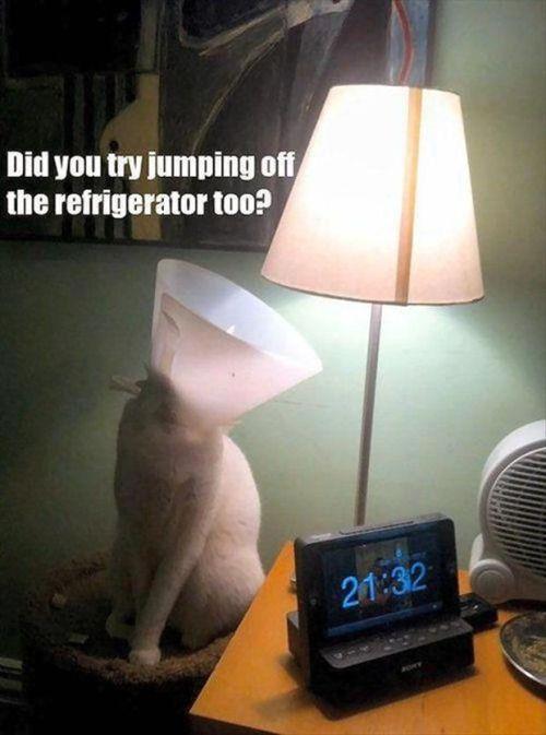 Cat talking to lamp