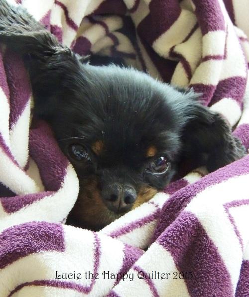 Comfy Maisie